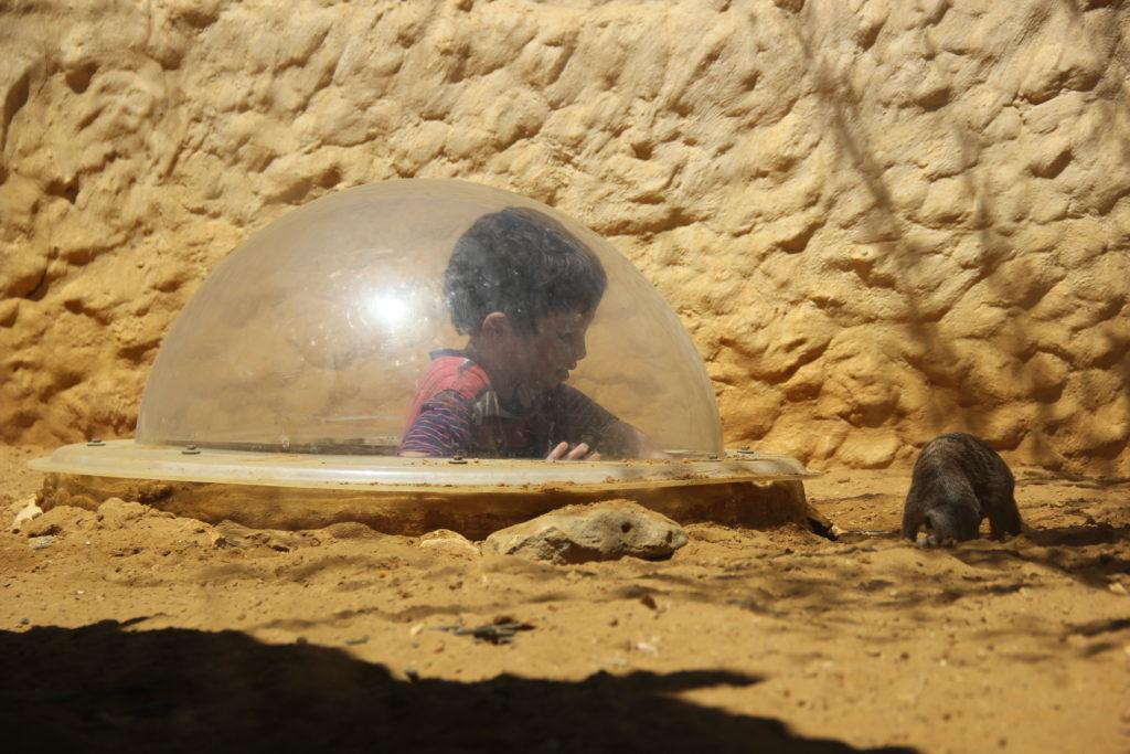 מ-אקווריום ישראל  אל גן החיות התנכי - אטרקציות לילדים בירושלים | עינבר שחק